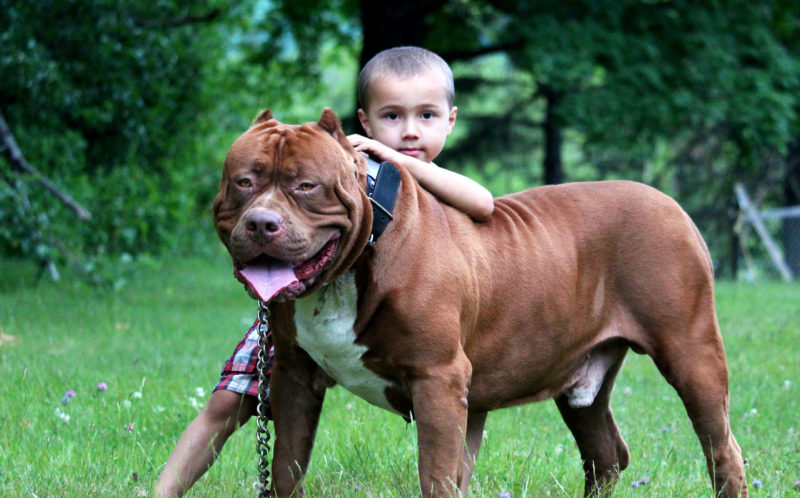 can pit bulls be safe with kids