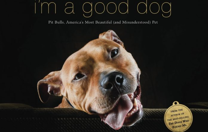 american pit bull terrier books worth reading
